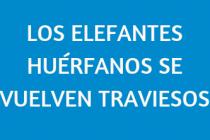 LOS ELEFANTES HUÉRFANOS SE VUELVEN TRAVIESOS