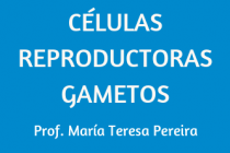 CÉLULAS REPRODUCTORAS (GAMETOS)