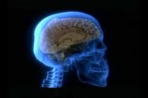 Módulo 9: Anatomía del Sistema Nervioso