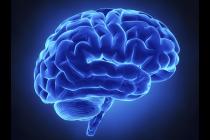 Módulo 10: ¿Cómo funciona nuestro Sistema Nervioso?