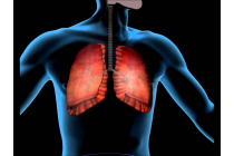 Módulo 11: Aparato Respiratorio