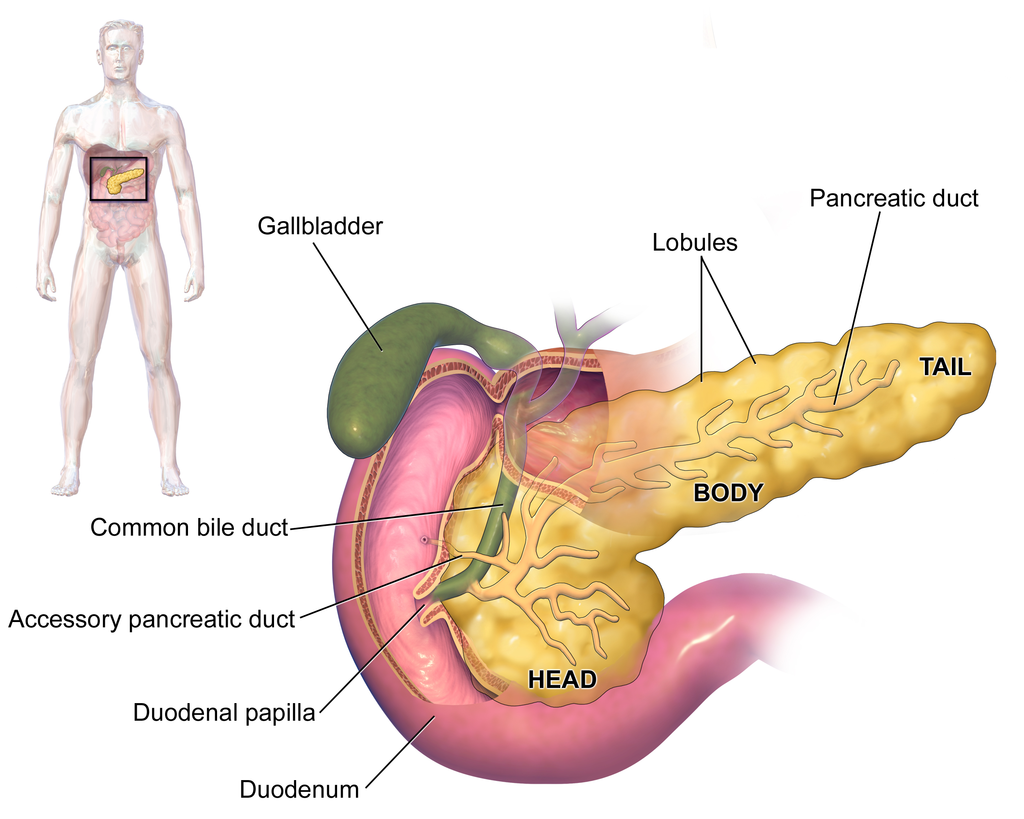 Material de consulta: Hígado y Páncreas