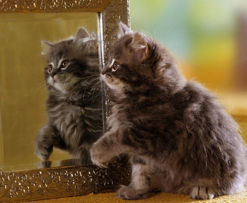 Qu es la reflexi n de la luz reflexi n especular for Espejo que no invierte la imagen