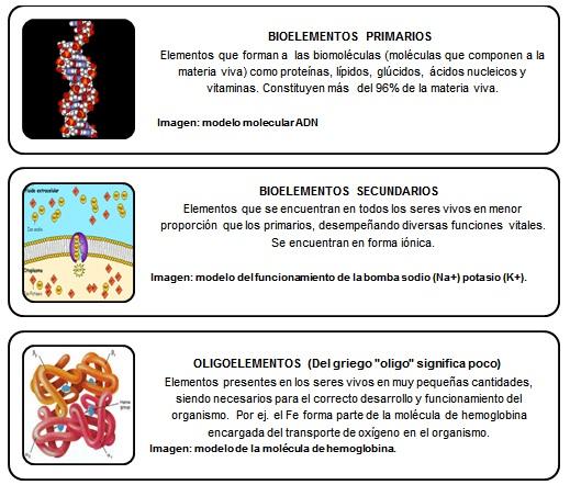 Bioelementos recuadros