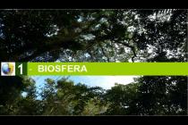 Tema 9 - La Biósfera