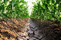 Análisis de muestras de suelo