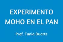 EXPERIMENTO. MOHO EN EL PAN